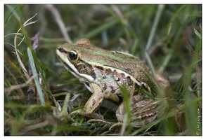 20130829-0340-Grenouille