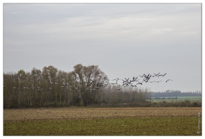 20141120-54 7287-Grues route Landricourt web
