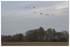 20141120-57 7307-Grues route Landricourt web